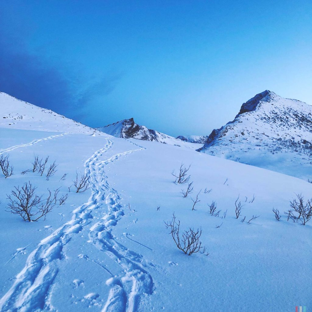 Winter Whale Watching in Norway: Snowshoeing tracks along the Bergsfjord on Senja Island.