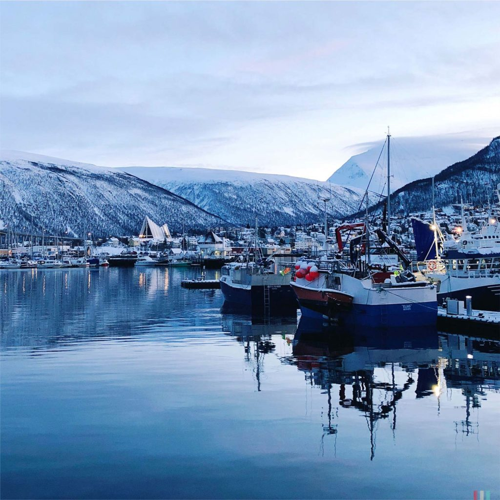 Winter Whale Watching in Norway: Arctic Cathedral